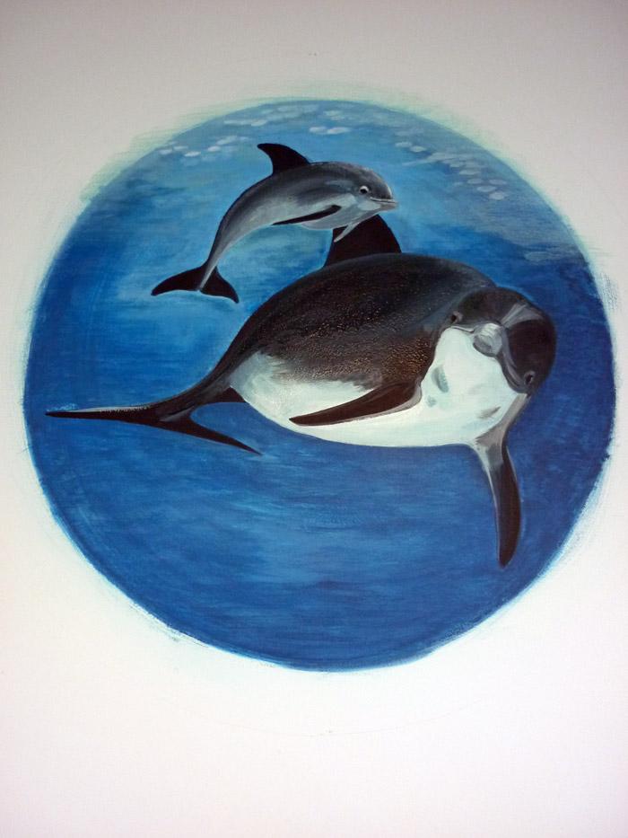 Dauphins : un dauphin et son petit